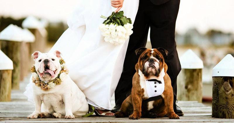 Mốt chụp hình cưới cực đáng yêu với cún cưng