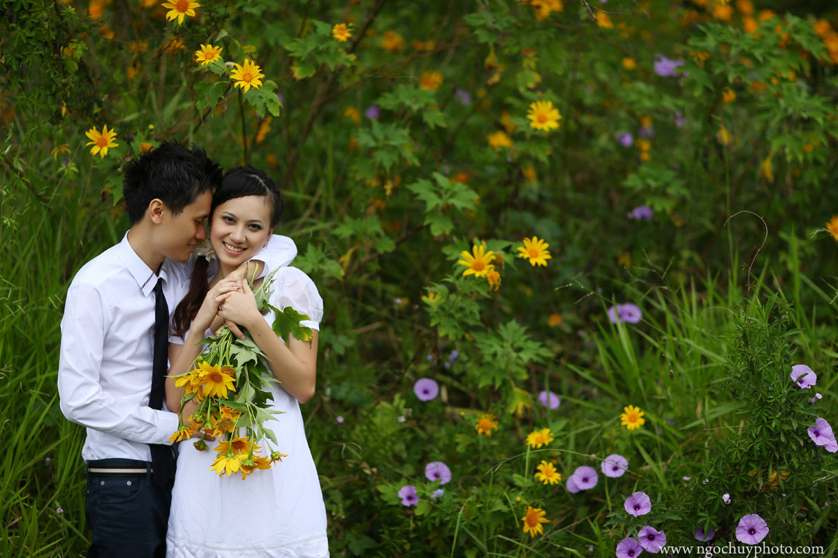 Chụp hình cưới mùa dã quỳ