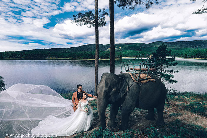 Mới: Album cưới siêu độc với chú voi đáng yêu