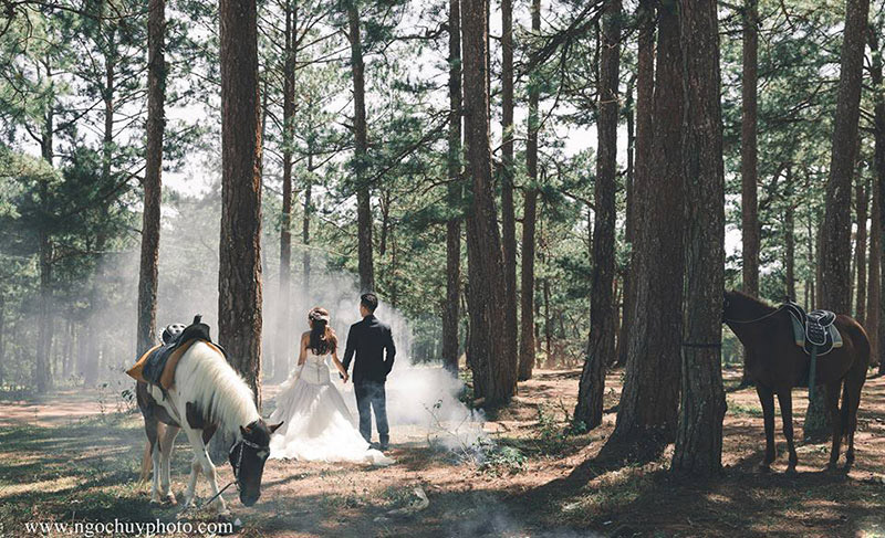 Những khung cảnh không thể bỏ qua trong album cưới Đà Lạt