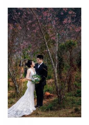 Ảnh cưới đẹp với hoa anh đào